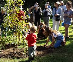 gallipoli centenary peace campaign peace justice for all tree planting anzac day 2016
