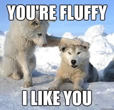 You're fluffy I like you - Caring Husky - quickmeme via Relatably.com