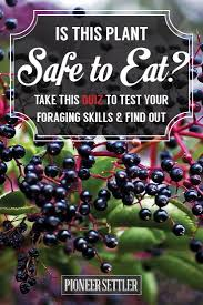 17 best ideas about zombie survival quiz zombies check out foraging for edible wild plants could you survive quiz at