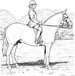 Раскраски лошадок онлайн