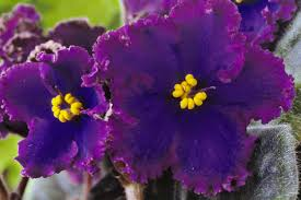 Names of Common <b>Flowers</b> in Mandarin Chinese