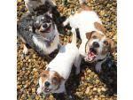 <b>GiGwi</b> Duraspikes Extra Durable <b>игрушка</b> скунс для собак (75407 ...