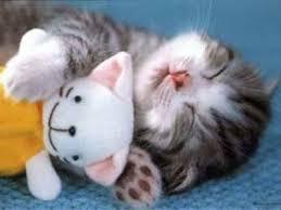 """Résultat de recherche d'images pour """"image chaton mignon"""""""