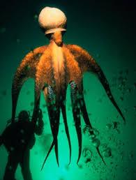 """Résultat de recherche d'images pour """"pieuvre géante"""""""