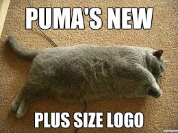 Fat Cat | WeKnowMemes via Relatably.com