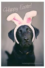 Image result for happy black lab