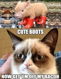 best-funniest-grumpy-cat-2.jpg via Relatably.com