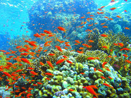 essay on the coral reefs in