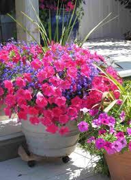 flower pot container ideas planters summer