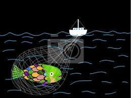 Resultado de imagem para peixes capturados