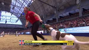 The Kennel Club <b>Large</b> Novice Dog Jumping <b>Grand Prix</b> at Olympia ...