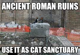 ancient roman ruins use it as cat sanctuary - Scumbag Cat - quickmeme via Relatably.com