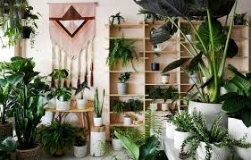 <b>Monstera</b> Care Guide - How to grow a huge <b>Monstera</b> fast. |