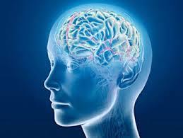 「大腦」的圖片搜尋結果