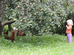 Image result for sleeping in an apple orchard