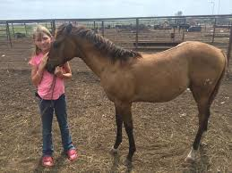 little cowgirl wins fancy filly with winning essay verifying why    pic img
