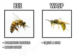 Bee vs. wasp | Funny Pictures and Quotes via Relatably.com