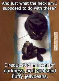 FunnyMemes.com • Cat memes - [Fluffy jellybeans] via Relatably.com
