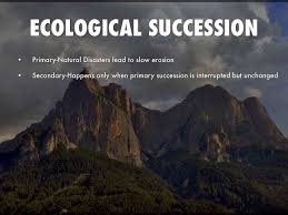 short essay on ecological succession words