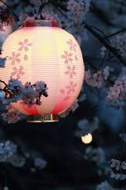 43 Best cherry blossoms images in 2012 | Beautiful places, Beautiful ...