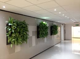 Plants In The Office And Their Benefits  L