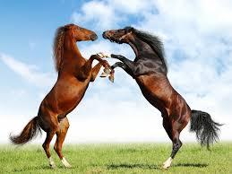 Γνωρίζετε πόσες φορές αναφέρεται το άλογο στην Ιλιάδα;