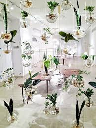 indoor garden ideas bonsai tree interior
