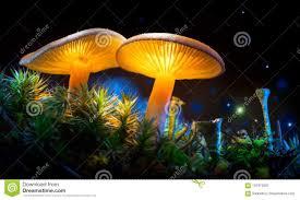 Mushroom. <b>Fantasy</b> Glowing Mushrooms In Mystery Dark <b>Forest</b> ...