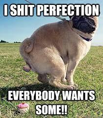 agreeable pug memes | quickmeme via Relatably.com