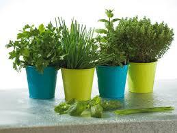 """Résultat de recherche d'images pour """"pots de plantes condimentaires"""""""