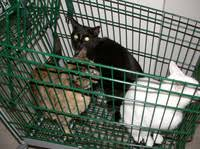 Image result for cats shopping