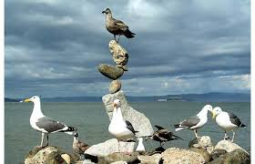 Image result for balancing act - picture