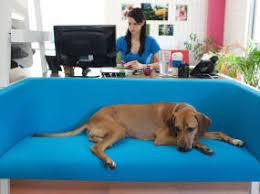 bivi rumble seat bivi modular office furniture