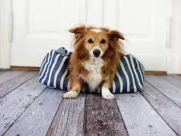 Dog bed, cat bed, stripes, maritim, dog, cat, pillow ... - Three-Quarters