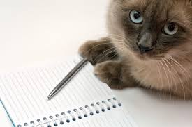 cat essay writerexcessum cat essay writer tk