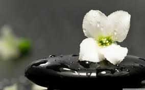 Image result for two stones with a flower