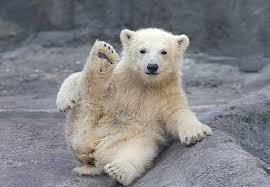 Resultado de imagem para filhotes de ursos