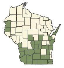 Minuartia michauxii - Online Virtual Flora of Wisconsin