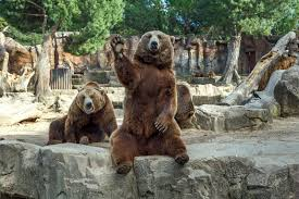 Image result for chester zoo waving animal