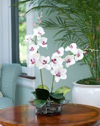 day orchid decor: enhance your room decor with phalaenopsis silk orchid arrangement at petals