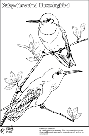 Small Picture Hummingbird Coloring Page nywestierescuecom