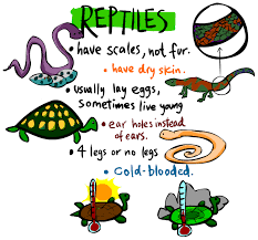 Image result for reptiles