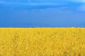 "На переговорах с ""Газпромом"" речь об авансе за транзит не шла. Обсуждались условия нового зимнего пакета,- ""Нафтогаз"" - Цензор.НЕТ 6101"