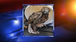 City of Athens employees rescue owl stuck in wastewater plant
