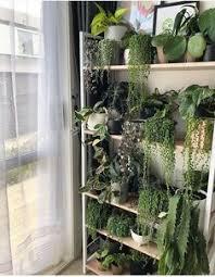 22 Best [ urban jungle bloggers ] images in 2019 | <b>Gardening</b>, <b>Indoor</b> ...