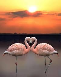 <b>New 5D</b> DIY <b>Diamond</b> Painting Stones pink Flamingo love <b>Diamond</b> ...