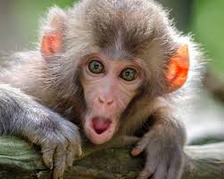 Monkey Day — December 14, 2019 | National Today