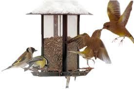 """Résultat de recherche d'images pour """"gif petits oiseaux"""""""