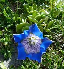 Iberis spathulata – A Mediterranean nature blog -