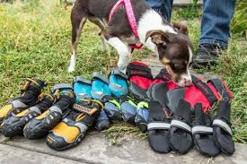 The Best <b>Dog Boots</b>: Reviews by Wirecutter